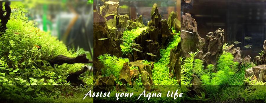 Assist your Aqua life